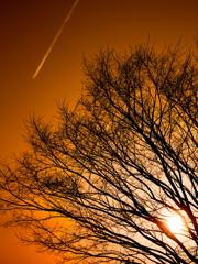 In the browny sky