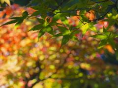 キャンディー色の秋