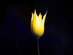 暗闇の黄婦人