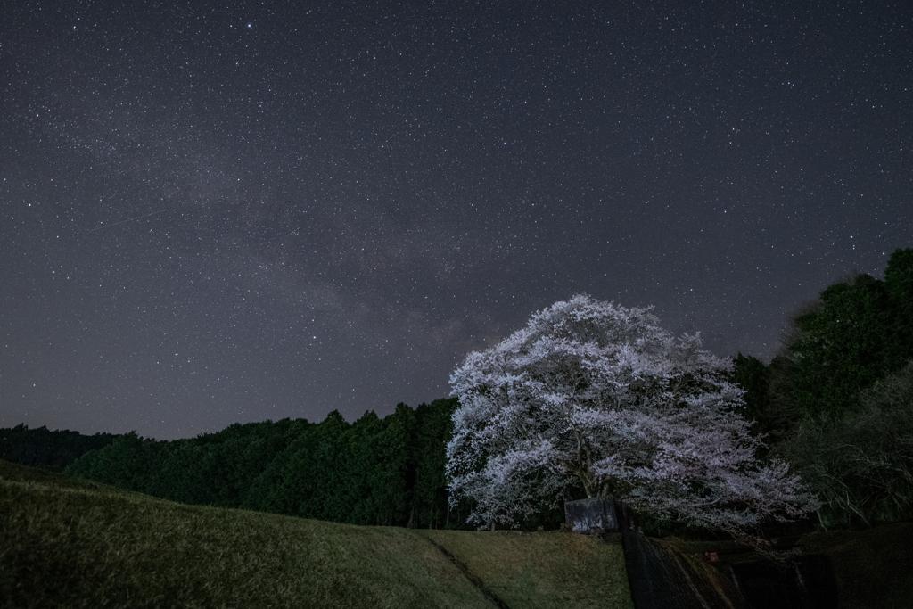星夜の一本桜