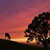 若草山の夕景