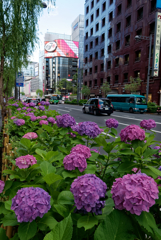 Ginza street pics #38