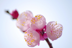 目覚めの春