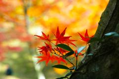 ちいさな秋