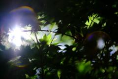 夏の陽ざし