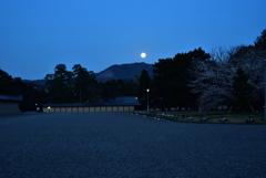御所のお月見桜【京都御苑】