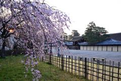 近衛邸の春光【京都御苑・近衛邸跡】