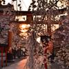 魁桜のあけぼの【平野神社】