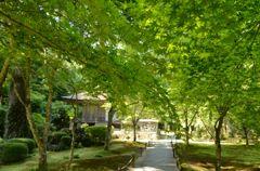 緑いっぱいの三千院