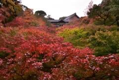 紅河の天橋【東福寺】