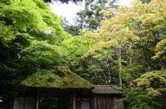 新緑の京都・法然院