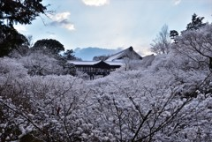 白河の天橋【東福寺】