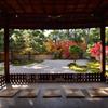 式部の秋【蘆山寺】
