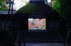 そうだ京都を写そう!法然院2