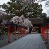平野神社の忘春【平野神社】