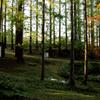 晩秋の森林浴