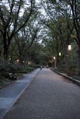 靭公園の欅並木