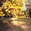 Natural yellow あるいは Previous life