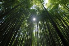 竹を透して