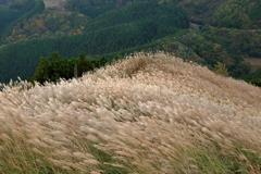 奈良の海原
