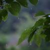 梅雨は間近