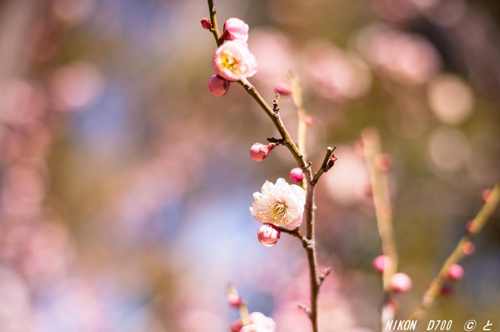 「春の足音4」