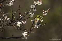 「春光浴びながら」