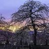 「夕暮れと枝垂れ梅」