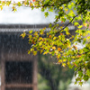 「雨煙る普門寺」