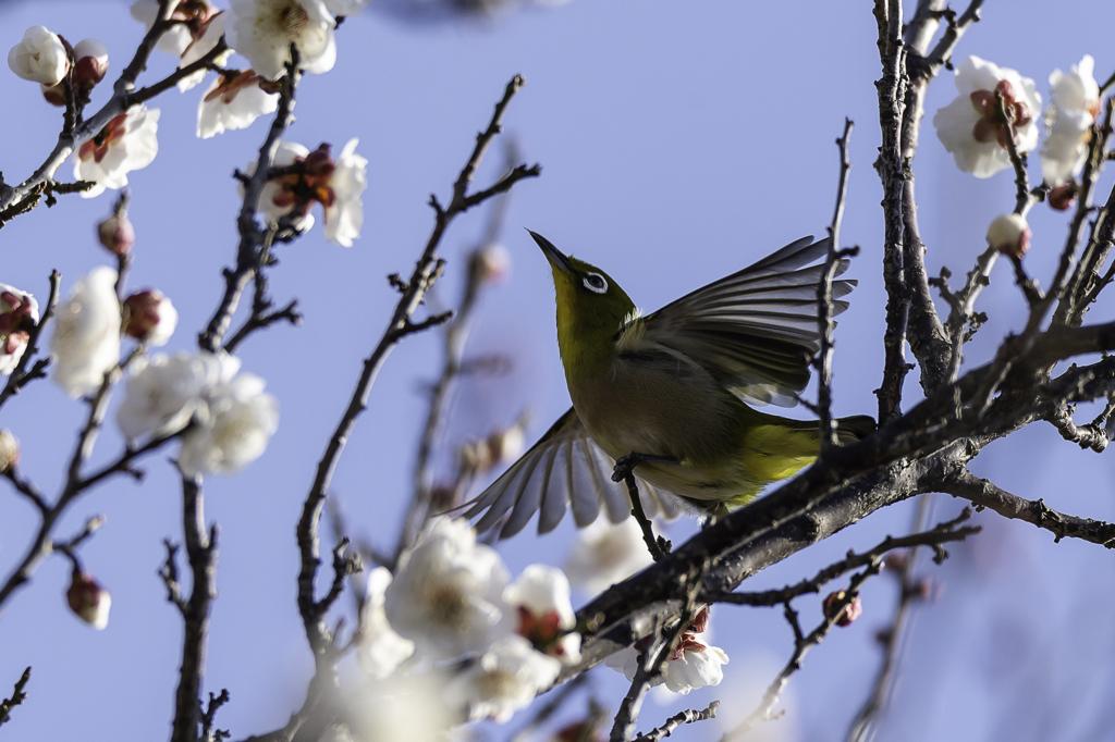 「春待ち」