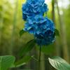 「竹林の藍2」