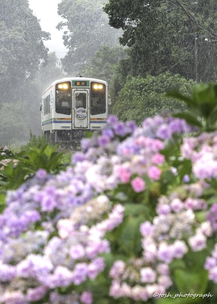 「梅雨列車」