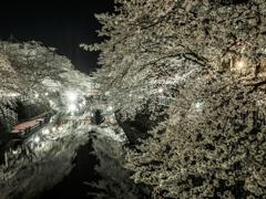 満開 夜桜