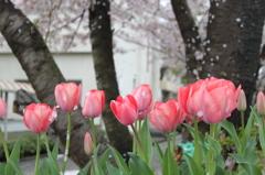 春 雨上がりに