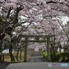 常盤神社と桜
