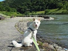 愛犬ロクの散歩