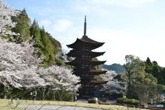 瑠璃光寺と桜