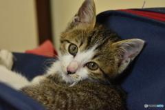 保護した野良猫の赤ちゃん