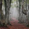 濃霧のブナ林にて*1