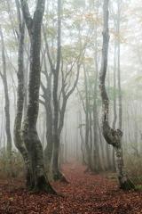 濃霧の森の小道
