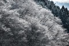 今年最初の雪の華*2