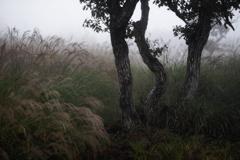雨霧SNAP*2