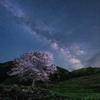 咲かぬとあきらめていた桜が咲いてくれた喜び*2
