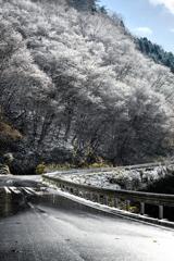 今年最初の雪の華*1