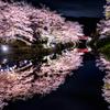 城跡の夜桜