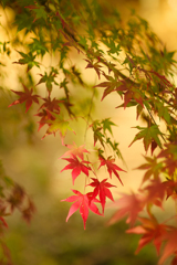 紅葉Photo*1