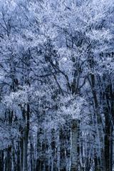 樹氷を纏うブナ林*2