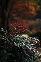 紅葉Snap*9