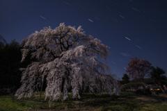 沈む冬の第三角と枝垂れ桜