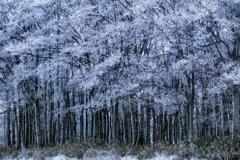 樹氷を纏うブナ林*1